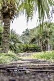 段落在从低角度的庭院里 免版税库存照片