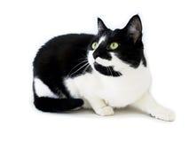 殷勤猫 免版税库存图片