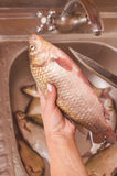 毁坏和清洗在水槽的鱼 库存照片