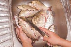 毁坏和清洗在水槽的鱼 免版税库存照片
