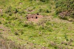 毁坏新西兰乡下的养兔场 免版税库存图片