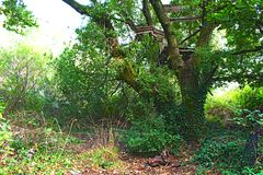 毁坏树上小屋的一张绿色照片 免版税库存图片