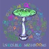 毁坏的天使蘑菇 皇族释放例证