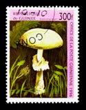 毁坏的天使,蘑菇serie,大约1996年 免版税库存照片