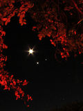毁损月亮金星 免版税库存照片