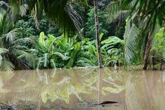 毁灭的洪水 免版税库存图片
