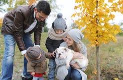 母亲、父亲、户外牛头犬孩子和两小狗  户外秋天 免版税库存图片