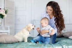 母亲、年轻儿子和一只美丽的金毛猎犬小狗在床上 库存图片