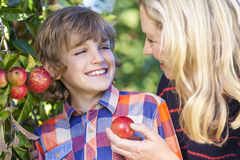 母亲儿子妇女男孩吃苹果计算机的儿童采摘 免版税库存照片
