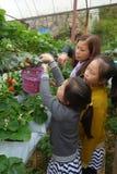 年轻母亲和两个小女孩获得在草莓f的乐趣 免版税库存照片