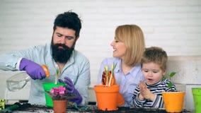 母亲和儿子在棕榈拍手并且唱歌曲,直到父亲植物在罐开花 获得与您的家庭的乐趣 股票录像