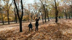 母亲和儿子在秋天公园收集和黄色叶子的trow 影视素材