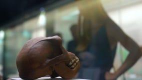 母亲和儿子在自然历史博物馆观看历史博览会 一个古老人的头骨的econstruction 股票录像