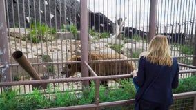 母亲和儿子是与熊的近的笼子在动物园 股票录像