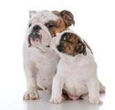 母亲和儿子狗 库存图片