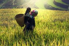 母亲和女儿玉米田的 库存图片