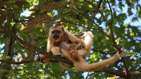 母亲和女儿猴子 免版税库存照片