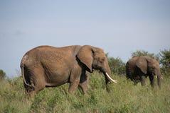 母亲和婴孩大象 免版税库存照片