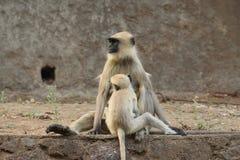 母亲和孩子永恒债券  库存照片