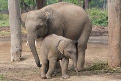母亲和孩子 免版税库存图片