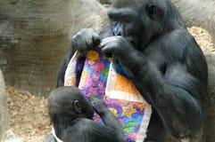 母亲和小大猩猩 免版税库存图片
