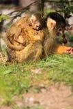母亲和小松鼠猴子 免版税库存图片