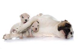 母亲和小狗美国人牛头犬 免版税图库摄影