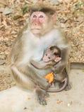 母亲和小猴子景色 免版税库存照片