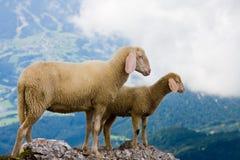 母亲和小绵羊 图库摄影