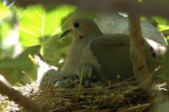 母亲和幼鸟 库存照片