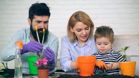 母亲和父亲教他们的儿子如何种植在罐的花 休闲年轻人家庭 股票视频