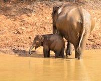 母亲和婴孩大象沐浴 免版税图库摄影