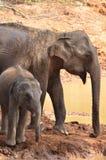 母亲和婴孩大象沐浴 图库摄影