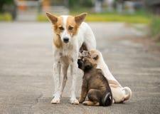 母亲喂养她的在街道,在路的无家可归的狗生活上的炉渣狗小狗 图库摄影