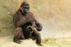 母亲大猩猩&婴孩 库存图片