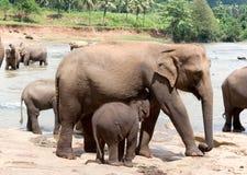 母亲大象和婴孩 免版税库存图片