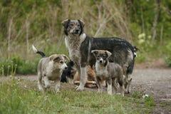 母亲狗和她的小狗 免版税图库摄影