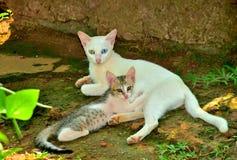 母亲猫和小猫 免版税库存照片