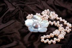 母亲珍珠 免版税库存照片