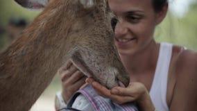 母亲用一点女儿哺养鹿 影视素材