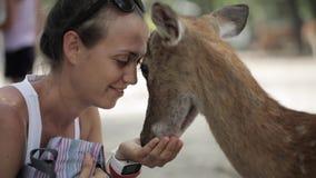 母亲用一点女儿哺养鹿 股票录像