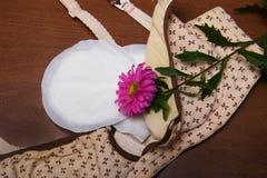母亲的护理胸罩 与新的一次性乳房垫的妈妈胸罩 防止牛奶流程在衣裳的 翠菊花 库存图片