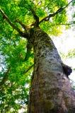 母亲结构树 库存图片