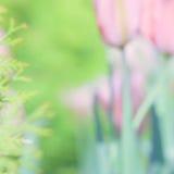 母亲节或复活节郁金香卡片材料的照片 免版税库存照片