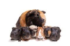 母亲试验品和她的六个婴孩 免版税库存照片
