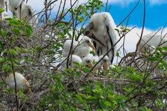 母亲鸟和她新的婴孩 库存图片