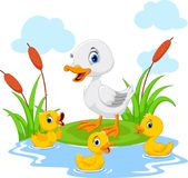母亲鸭子游泳用她的三只小的逗人喜爱的鸭子在池塘 滑稽和可爱 向量例证