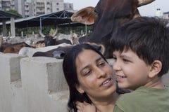 母亲&孩子画象母牛风雨棚的 库存图片