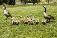 母亲Goose1 免版税库存图片