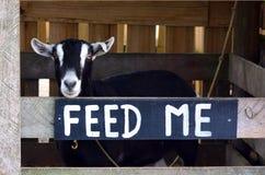 母山羊在山羊农场 免版税库存图片